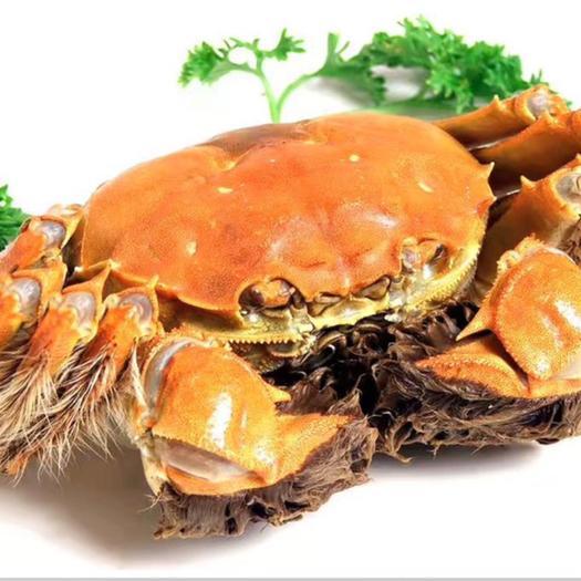 兴化大闸蟹  ,品质第一,服务至上,当天发货,第二天到货