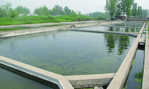 池塘养鱼为什么要有良好的水色