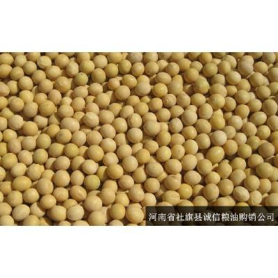 河南南阳黄豆