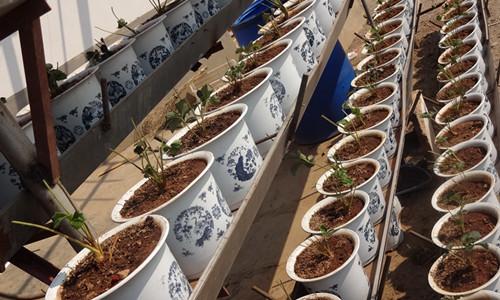 英超外围 -盆栽花卉生长好 盆土配置有讲究