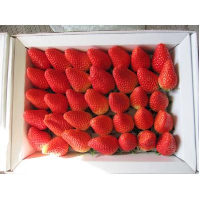 山东临沂美国甜查理草莓 20克以上 新鲜