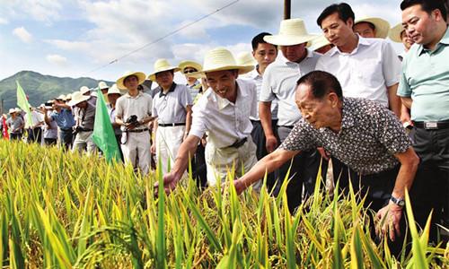 英超外围 -发展超级杂交水稻 保障国家粮食安