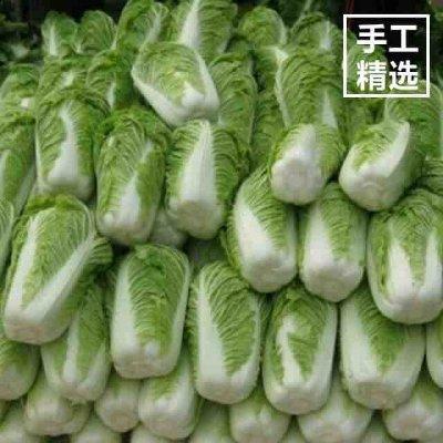 江苏省盐城市东台市黄牙白白菜