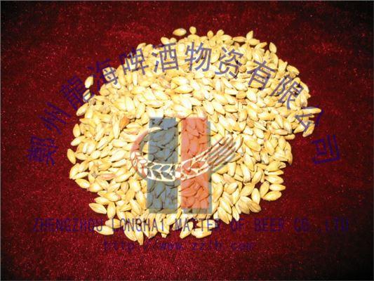 河南郑州大麦