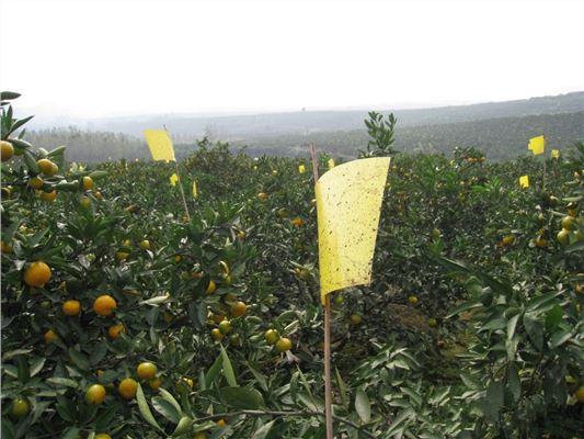 陕西宝鸡生产销售柑橘专用黄板