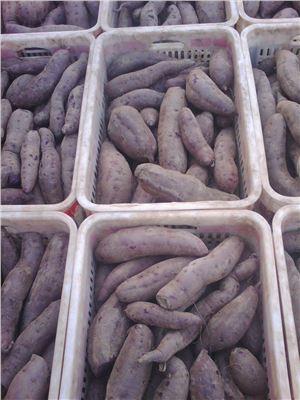 河北水果蔬菜批发/供应|河北水果蔬菜价格-河北水果