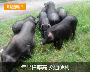 洞口县茶铺茶场香猪养殖专业合作社