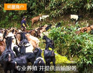 洞口群鑫畜牧养殖专业合作社