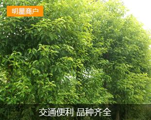 老杨五彩园林苗圃