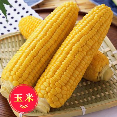 内蒙古鄂尔多斯玉米