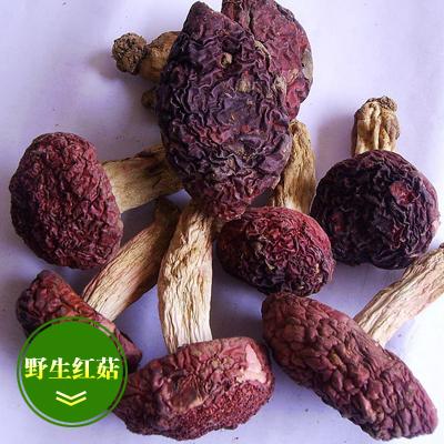 江西赣州蘑菇 野生红菇