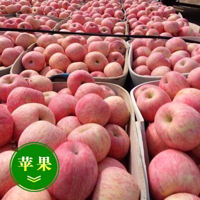 山东淄博红富士苹果 75 - 80mm 条红 纸袋 苹果红富士苹果