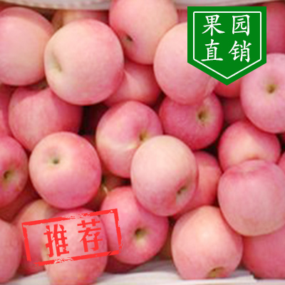 山东临沂红富士苹果