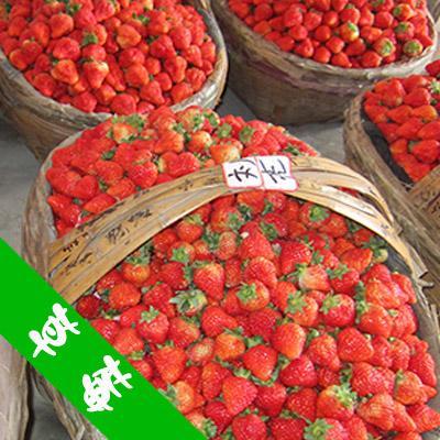 湖南湘西草莓