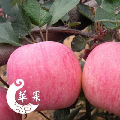 这是一张关于红富士苹果 80 - 85mm 条红 纸袋 苹果 红富士苹果的产品图片