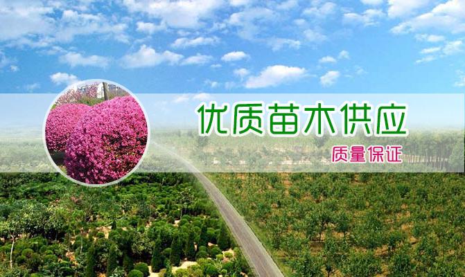 桃源县大象园林绿化有限公司