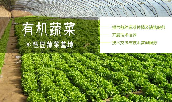 钰园蔬菜基地