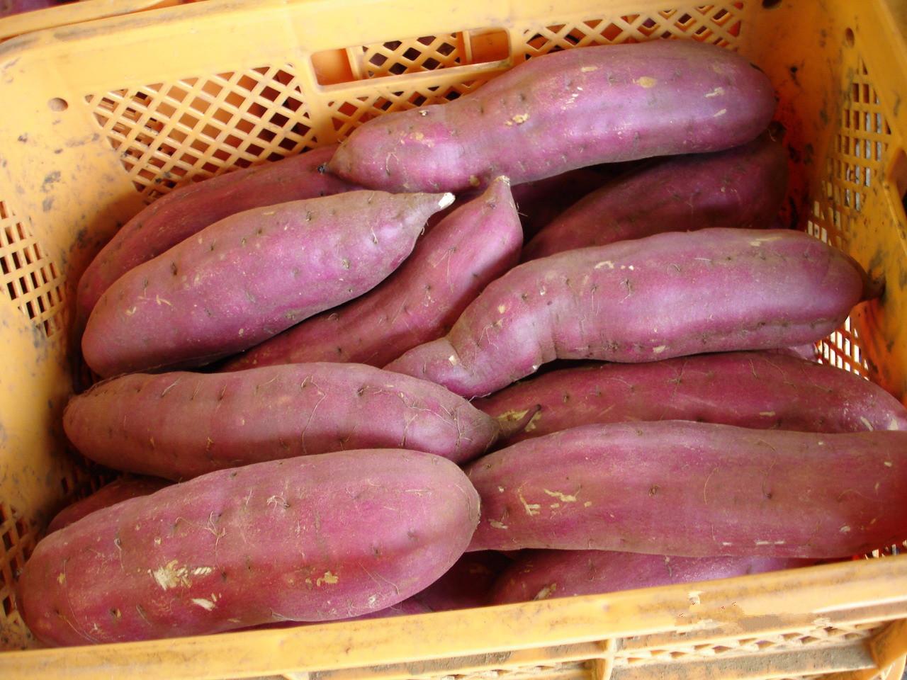红薯 来福红薯批发供应 红薯 来福红薯价格行情 红薯 来福红薯商家 中国惠农网