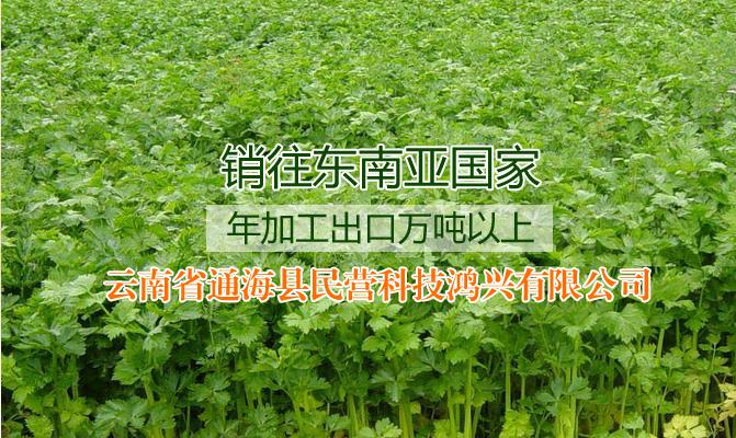云南省通海县民营科技鸿兴有限公司