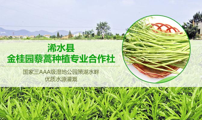 浠水县金桂园藜蒿种植专业合作社