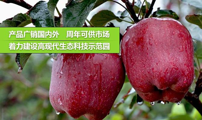 秦安县农园果蔬有限公司
