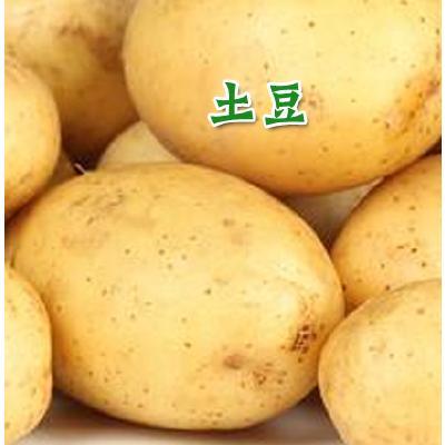 山东枣庄荷兰15号土豆 1两以上 三两以上
