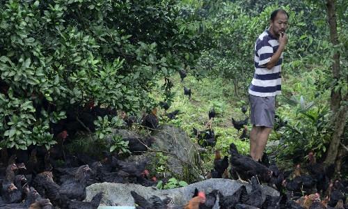 农场+电商,刘小平一个生态农场的自我修养