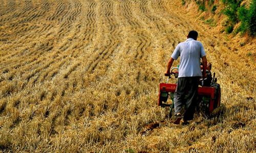 这是一张高校农业专家教授直接与农户挂钩对接的配图