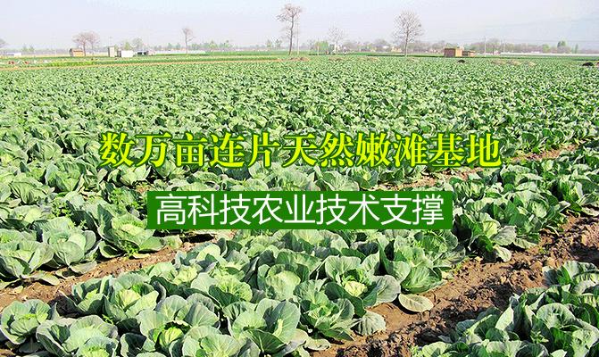 郑州连万家农副产品专业合作社