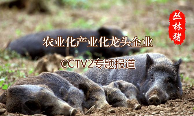 河南丽群养殖有限公司
