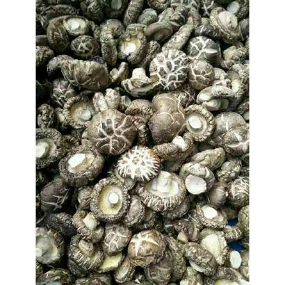 湖北十堰花菇,茶花菇