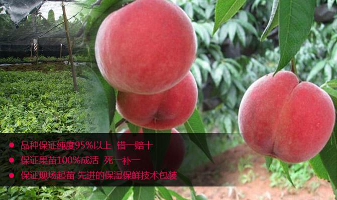 长丰县庄顺果树良种有限公司