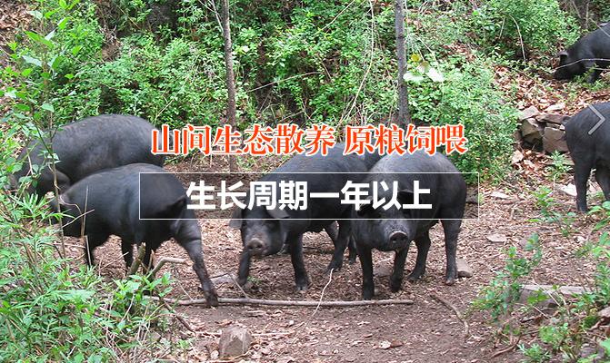 吉县文山生态养殖场合作社