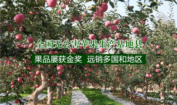 吉县(壶口)苹果