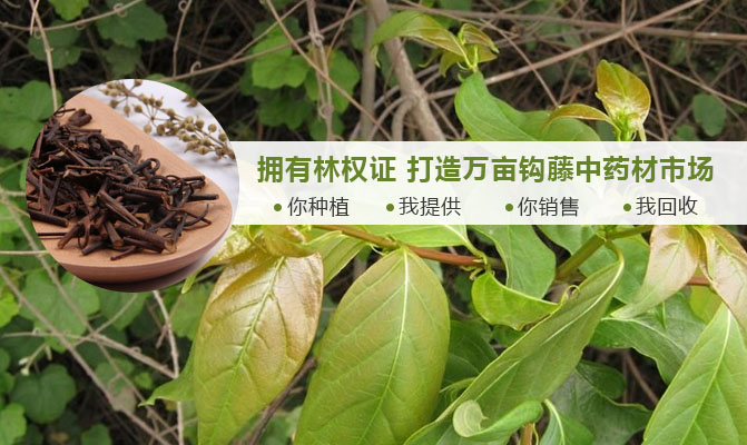 辰溪县山水情钩藤种植专业合作社