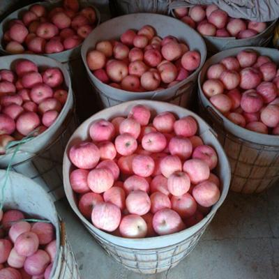 山东日照红富士苹果 70 - 75mm 表光 纸袋 苹果