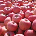 洛川红富士苹果