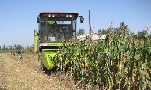 这是一张广西:聚焦生态特色农业新发展的配图