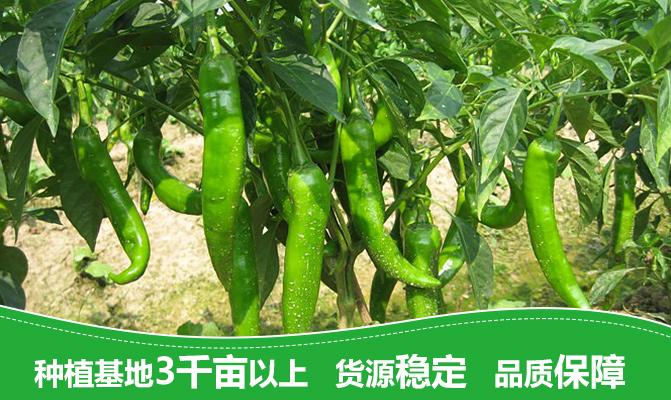 昌江乌烈兴农种养专业合作社