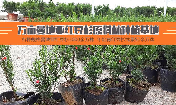 重庆市碚圣医药科技股份有限公司