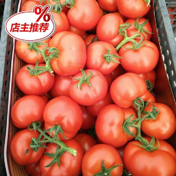 优质西红柿