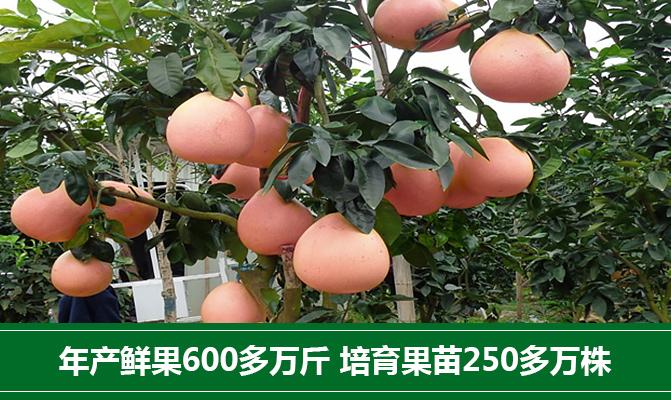 漳州市平和县柚冠果业有限公司