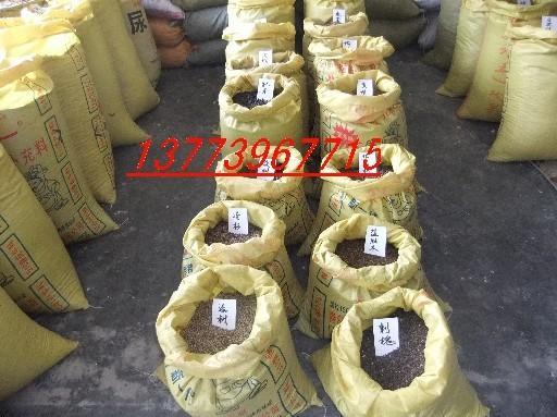 江苏宿迁红叶小檗种子,榉树种子,鸡爪槭种子