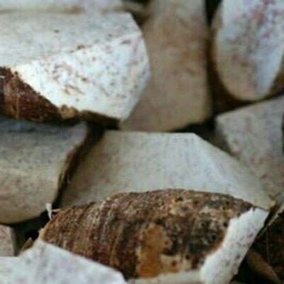 江西抚州槟榔芋 5cm以上 芋头