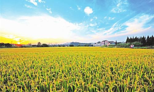这是一张淮北市创新实施农业现代化推进工程的配图