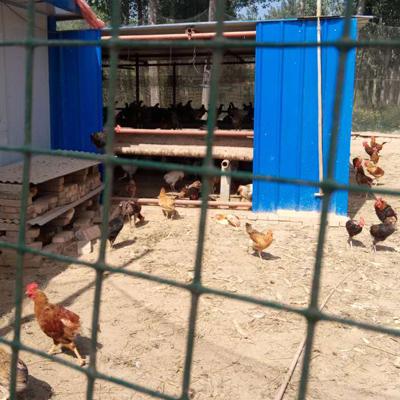 这是一张关于土鸡 2-3斤 统货 鸡的产品图片