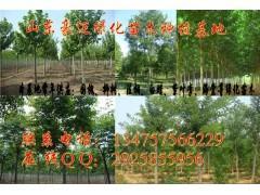 山东济南合欢树苗价格