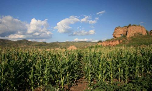 这是一张今年玉米补贴资金10月底前发完 每公顷补贴2250元左右的配图