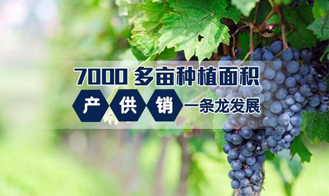 北镇市宝兴葡萄生产专业合作社