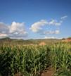 今年玉米补贴资金10月底前发完 每公顷补贴2250元左右